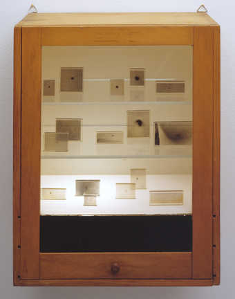 A wooden and glass shelved case containg plastic photo-embedments of moles.  The bottom shelf is...