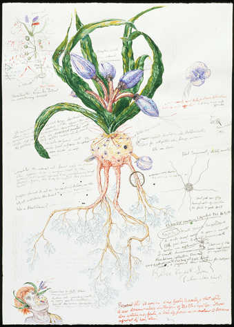 Fantasy plant form surrounded by pseudoscientific descriptions.
